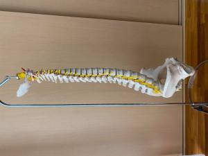 osso2